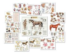 Equine Anatomy CHART SET of 13 Charts   LFA #2559X SPECIAL OFFER