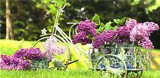 XXL-Ansichtskarte: Fahrrad als Blumenständer für Flieder - bicycle