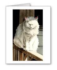 CAT NAP Set of 10 Note Cards With Envelopes