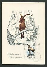 SPAIN MK 1971 FAUNA STEINBOCK CAPRICORN DEER MAXIMUMKARTE MAXIMUM CARD MC d3106