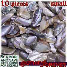 10 Small 10mm Combo Ship Tumbled Gem Stone Crystal Natural - Abalone Shell