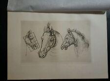 after Leonardo da Vinci  by AMAND DURAND 1880 horses