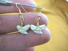 "(s818-3) modern 1/2"" Tiger SHARK TOOTH gold wired Earrings Teeth sharks jewelry"
