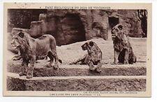 CPA 94 PARC ZOOLOGIQUE DU  bois de VINCENNES les lions sur leur plateau