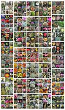 30 graines de cactus mèlanges, plantes grasses, cactus seeds mix succulents F