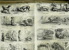 1868 French Engravings COMICS Egypt Saint-Lazare Schwarzwald Forêt-Noire Chinese