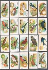 1924 Gossage & Sons British Birds & Their Eggs Tobacco Cards Complete Set of 48