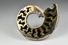 Pyrite Pyritized Ammonite Russia 7.1 cm # 388