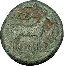 THESSALONICA 158BC Rare  Ancient Greek Coin DIONYSOS Wine God Cult GOAT i23143