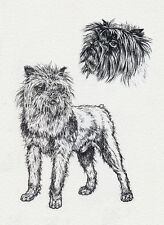 AFFENPINSCHER CHARMING DOG GREETINGS NOTE CARD BEAUTIFUL FULL DOG AND HEAD STUDY