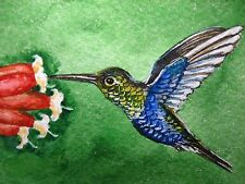 Watercolor Painting Fly Hummingbird Colibri Bird Red Flowers Nature ACEO Art .