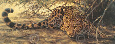Sunspots detail by Guy Coheleach Africa Leopard Animal Safari Print Poster 18x36