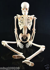 """Small Human Skeleton on Stand - Anatomical Model 18""""Inch - Medical Anatomy"""