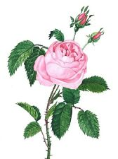 1.5x2 DOLLHOUSE MINIATURE PRINT OF PAINTING RYTA 1:12 SCALE PINK ROSE FLOWER ART