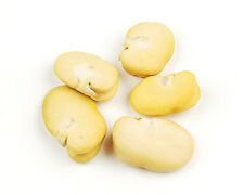 Whole Peeled Fava Beans-8oz- Habas Beans- Gluten Free Dried Beans