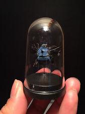 Cabinet de curiosités Insecte Globe Abeille bleu Xylocopa caerulea d'Indonesie!!
