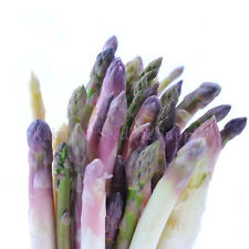 910mg PURPLE DUTCH ASPARAGUS SEEDS! ~ 50 ct Heirloom EARLY PRECOCE D'ARGENTEUIL