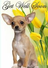 A5 Chihuahua Personalised Greeting Card Get Well Soon  PIDCHI1