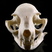 Resin Cat Skull Skeleton Figurine Aquarium Fish Tank Landscape Decoration