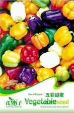 10 Multicolored bell peppers seeds capsicum frutescens C024