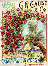 1898 Wooton Roses Vintage Flowers Seed Packet Catalogue Advertisement Poster