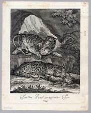 Tiger - Leopard - Tiere - Raubtier - Ridinger Kupferstich 1738 - Raubtiere