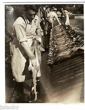 1938 PHOTO CHINOOK SALMON EGG REMOVAL KALAMA RIVER HATCHERY COOPER KELSO FISH