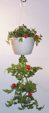 Hanging Tomato Garden Kit - Plant The TOP & The BOTTOM Of The Hanging Basket