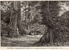 IMAGE 1893 PRINT NIGER IBI EVIRONS FORET NEARBY FOREST