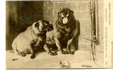 Vintage Postcard DOGS painting by Landseer UNCLE TOM & HIS WIFE FOR SALE