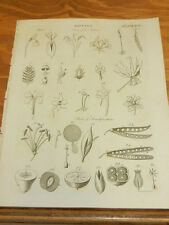 1817 Antique Print/BOTANY/PARTS OF PLANTS/FLOWERS USED TO STUDY THEIR GENUS