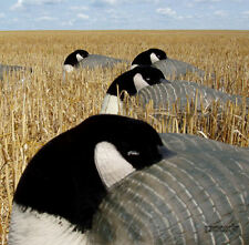 AVERY GREENHEAD GEAR GHG PRO GRADE LIFESIZE CANADA GOOSE SHELL SLEEPER DECOYS 6!