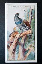 CAPERCAILLIE    Vintage 1920's Colour Card   VGC