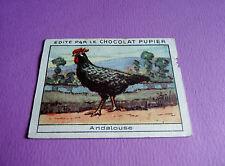 LES POULES ANDALOUSE  CHROMO CHOCOLAT PUPIER JOLIES IMAGES 1930