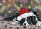Border Collie, working Collie, Christmas cards pack of 10 by Paul Doyle. C393x