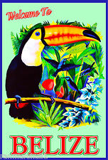 Belize Toucan Bird Birds Central America Caribbean Travel Poster Advertisement