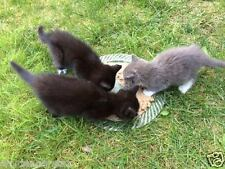 HELP FEED VET SPAY RESCUED KITTENS FERAL CAT RESCUE DONATION Rec COLOR PHOTO