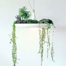 UK Echo Green Plant LED Pendant Lights for Living Room Bedroom Study Room Office