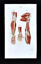 1867 Masse Human Anatomy Print - Circulatory System Arm Hand & Leg Foot Artery