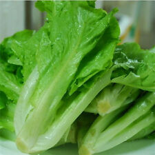 200pcs Natural Vegetable Seeds Non-GMO Lettuce Seeds Healthy Organic Plant A1 3o