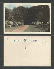 1910s RHINEFIELD RHODODENDRON DRIVE ENGLAND UK POSTCARD