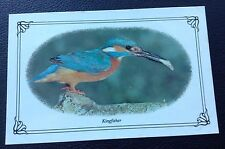 POSTCARD: (WB5): KINGFISHER: COLOUR: UN POSTED