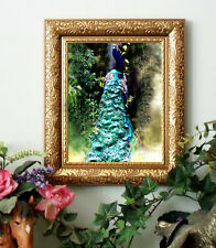 Peacock Gorgeous Framed .......for horse folks and farm friends