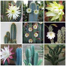 20 semi in miscuglio di Cereus mix ,piante grasse,seed cactus mix