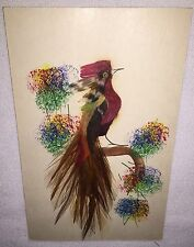 Vintage Postcard Handpainted Bird Real Feather Mexico Pink Orange Yellow Art