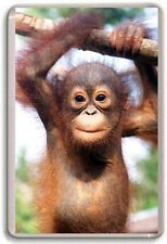 Baby Orangutan Cute Fridge Magnet 01