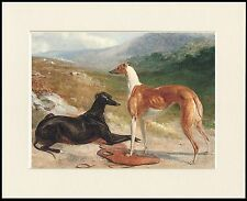 GREYHOUND LOVELY LITTLE DOG PRINT TWO DOGS MOUNTED READY TO FRAME