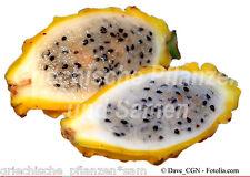 PITAHAYA gelb 10 Semillas Kübelpflanze deliciosa Frutas Frutos Fruta del dragón