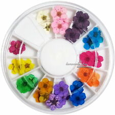 12 Color Real Dried Dry Flower for 3D UV Gel Acrylic False Tips Nail Art Craft