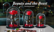 Preserved Red Rose in Glass Belle Beauty and the Beast Natural Disney Rose 27cm